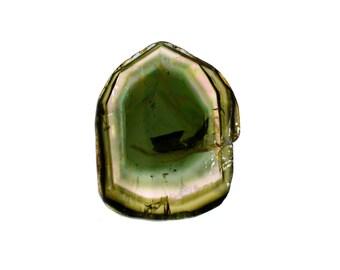 Watermelon Tourmaline Natural Tourmaline Slice 8.30 cts. 13.5x17 mm tri color Loose Gemstones - 3896