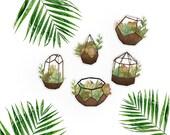 Succulent terrarium Flake-watercolor sticker-pretty planning-scrapbooking-bullet journaling