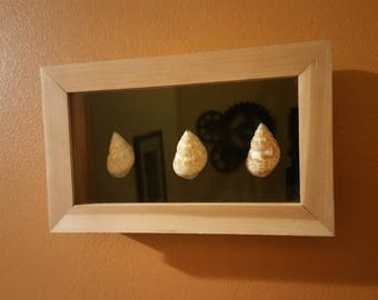 Shadow box with seashells
