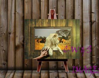 Lion Pats (canvas)