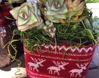 Succulent Sweater
