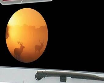 Wild Elk in the Wilderness Foggy Sunshine Day