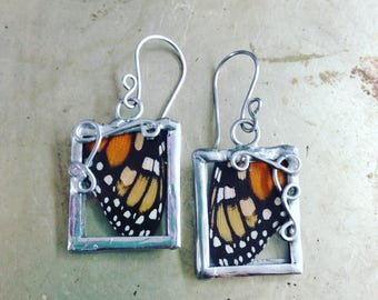 Monarch Butterfly Real Insect Earrings Nature Jewelry