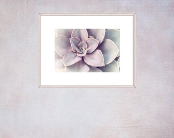 Purple Succulent Print, Succulent Wall Art, French Country Decor, Modern Bedroom Decor, Gift for Woman