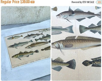 ON SALE Vintage Antique 1900 French SCHUBERT chromolithograph on cardboard Fish