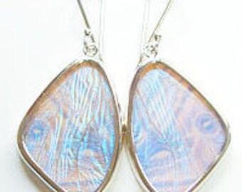 Pearl Blue Morpho Butterfly Wing Silver Dangle Earrings - Medium