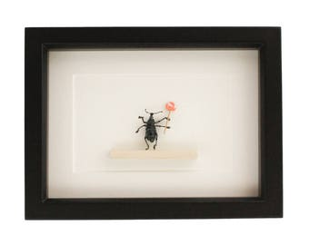 Real Beetle Holding Lollipop Insect Art
