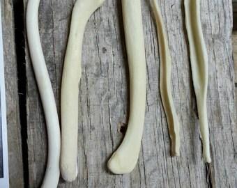Bacula Bones- 5 Baculum- Coyote Fox Badger Otter Real Bones- Lot No. 170610-AAA