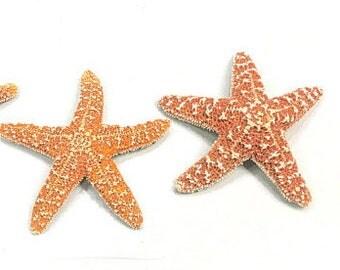 "Starfish - 2 Natural Sugar Starfish 3""-4""  Beach Decor Star Fish Bulk Beach Wedding Coastal Nautical Real Starfish"