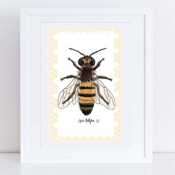 Honey Bee - Signed Print