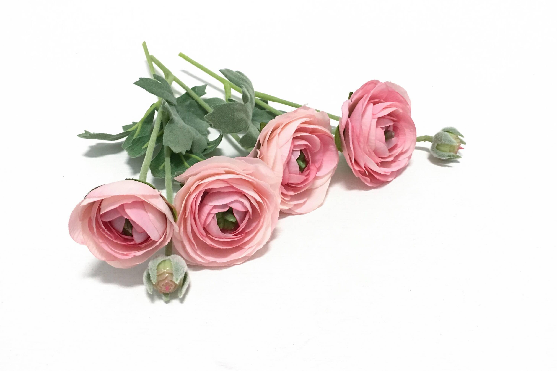 Artificial Pink Ranunculus Flowers Bud to Bloom on Stems