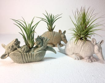 Ceramic Armadillo Planter with Airplant