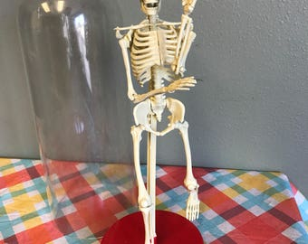 1991 Workman Publishing Company Science Class Skeleton