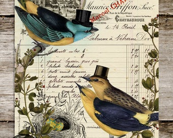 Mr. Flanders, Peddler of Fine Hats - Antique Style Natural History Bird Print from Curious London