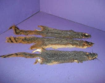 1 Tanned red fox squirral Fur hide Pelt real animal skin taxidermy rug part piece man cave craft unique