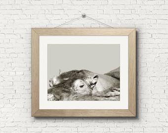 Digital download | NILE HIPPOPOTAMUS | animal art print | wildlife photo | animal nursery art | hippo art print | printable wall art