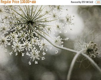 ON SALE Queen Anne's Lace, Queen of the Forest Print, Home and Office Decor, Flower Photography, Large Wall Art, Queen Annes Lace