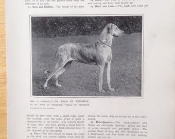 GREAT DANE Antique Dog lithograph print 1907 Robert Leighton show dogs Cassells Co London Christmas Thanksgiving Birthday present