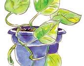 Purple Philodendron - 3&q...