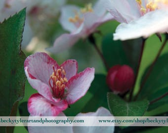 Cherry Blossom Macro Fine Art Photo Print