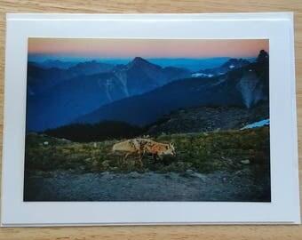 Cascade Red Fox Mount Rainier National Park Washington Photo Card