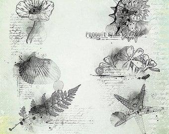 ON SALE Photoshop Brush, Vintage Digital Clipart, Vintage Photoshop Brushes v.4
