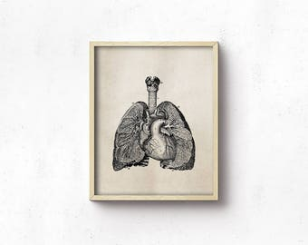 Anatomy Art PRINTABLE - Lungs - Vintage Science Art Print - Office Decor - Digital Download - Brown And Black - Medical Student - SKU:3010