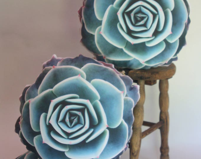 Succulent pillow Echeveria Imbricata 2-sided/outdoor