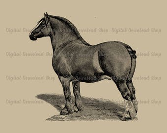 Vintage Clydesdale Horse Printable, Antique Horse Transfer Image, Draft Horse Clipart, Equine Wall Art, Horse Clipart, Farmhouse Decor
