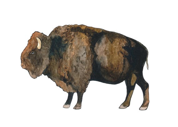 Original 5x7 Watercolor Buffalo Painting