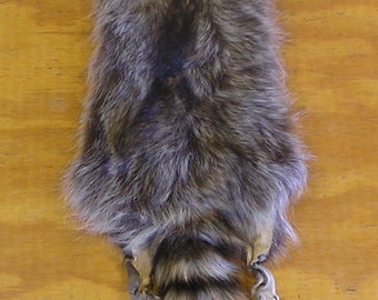 Wyoming Raccoon Pelt for Life Size Mount