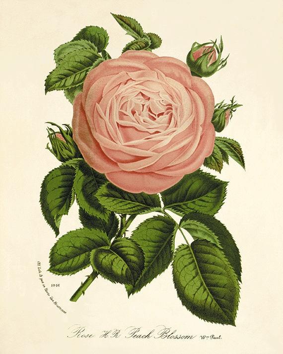 Vintage Flower Art 59