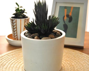 Plant pot cemento-hormigon | Succulent pot | Support of modern plant | Potted cactus | Flowerpots | Planter