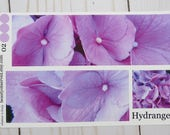 Beautiful pink hydrangea 02 full box photo planner stickers for life, daily, weekly, and monthly planners, pink, flower sticker, matte