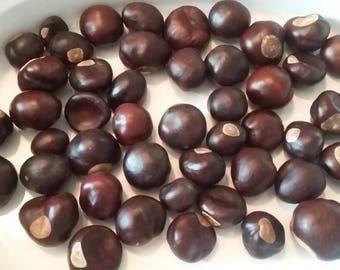 Buckeye Nuts Lot of 48 Nickle size
