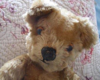 Vintage English teddy bear, golden fur
