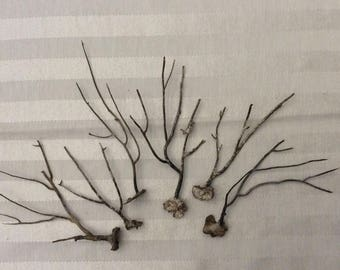 Brown Sea Fan Branches (Set of 6)