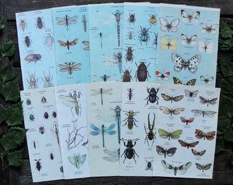 Butterflies Beetles Dragonflies - Set of 10 Vintage Entomology Book Pages. Junk Journalling Illustration Print Scrap Collage Paper Ephemera