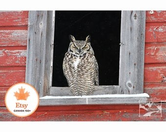 Great Horned Owl, Barn – #EtsyCA150+, Canada 150, Wildlife, Nature, Owl, Photograph, Home Décor, Art, Picture, Prints, Canvas – Alberta, CA