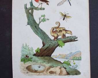 1839: Anteater with young, Antlion, etc. Natural History Engraving. Antique Hand-colored Print, Guerin. Original.