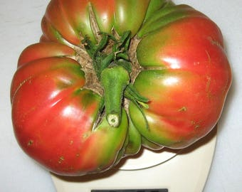 Epstein's Potato Leaf Heirloom Tomato Seeds
