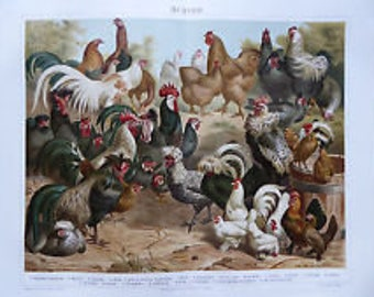 Chromolithography chickens
