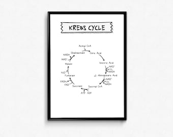 Science Print, Biochemistry Poster, Medical Student Gift, Nerd Wall Art, Chemistry Gift, Medical Posters, Krebs Cycle, Citric Acid Cycle