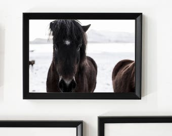 Icelandic Dark Horse/ Home Decor/ Gift/ Travel /Print / Wall Art / Unique/ Animal/ Horse/ Adventure/ Wanderlust / Digital /Fine Art/ Iceland