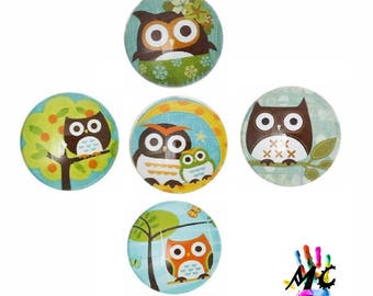 Set of 5 cabochons round glass owls theme