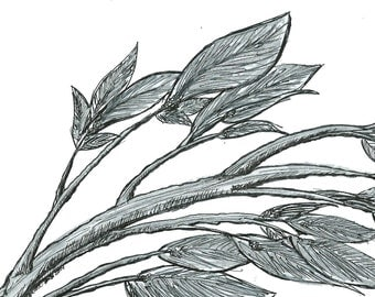 Black and White Art Print- Black and White Illustration- 'Silver Leaves' Illustration- Hand Drawn Reproductions- 8.5 x 11 Art Print
