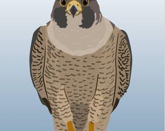 "Peregrine Falcon ""Falco Peregrinus"" Water Bottle"