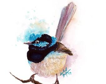 Blue Wren - Blue Wren Print - Art Print - Bird Print