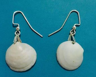 Small delicate white seashell earrings
