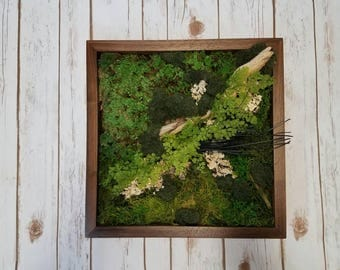 Moss wall art, all real and preserved, no water or maintenance needed!